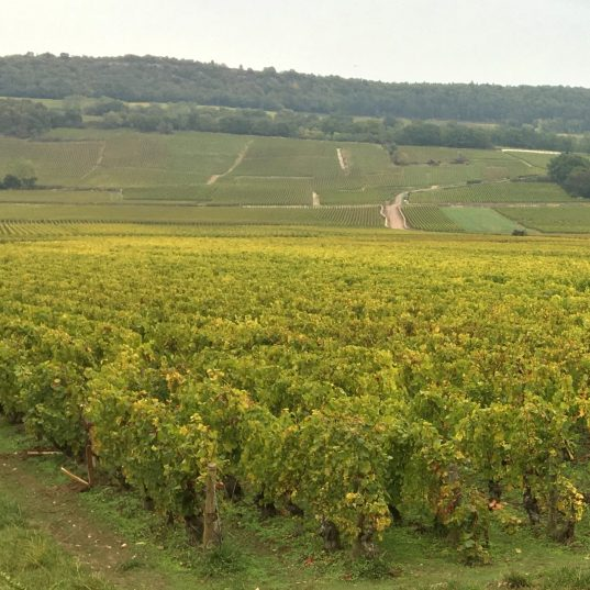 montrachet vineyards