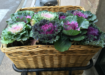 #A to Z: Ornamental Cabbage