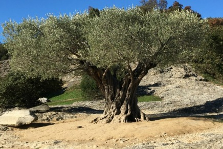 Texture: Ancient Olive