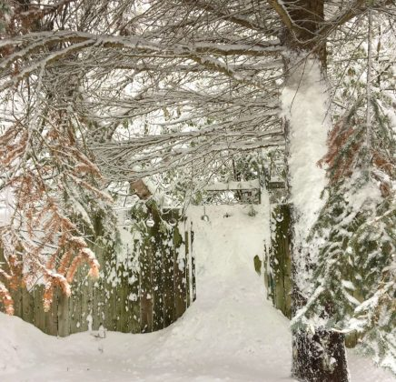 Wordless Wednesday – Snowgate