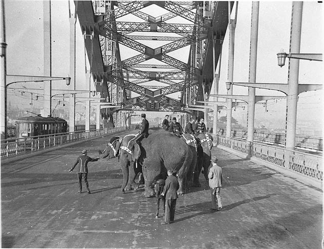 Circus elephants with their attendants and a Shetland pony crossing the Sydney Harbour Bridge for publicity, April 1932 / Sam Hood