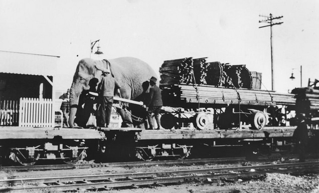 Circus moving by train, Queensland, Australia 1920s